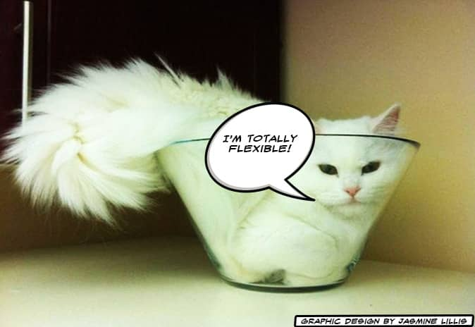 White cat in a bowl saying he's flexible. Flexibility in Workplace