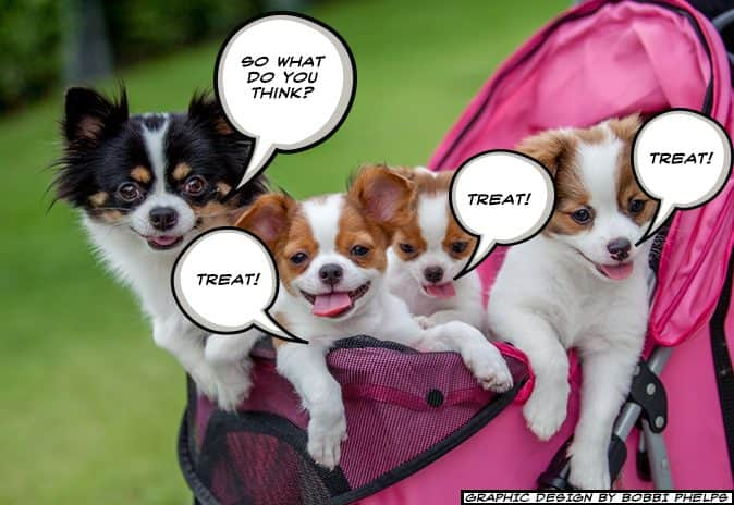 A picture of dogs thinking as a group. Teamwork